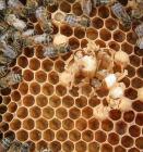 فعاليات الصالون الوطني للعسل وعتاد تربية النحل