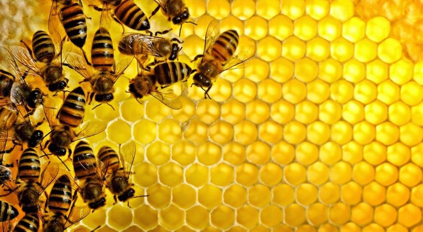 صنع النحلة للعسل